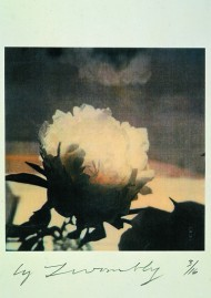 "Cy Twombly, ""Tree-peony"", Bassano in Teverina, 1980, dry print on cardboard, courtesy of the artist / Gagosian Gallery."